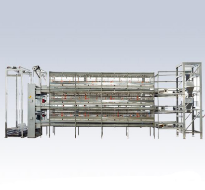 Cage Feeding System for Poultry Equipment
