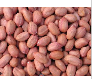 New Crop Red Skin Peanut Kernels