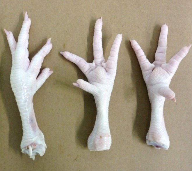 Processed frozen Chicken Feet and Paws Exporters from Brazil
