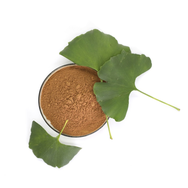 herbal medicine ginkgo biloba softgel