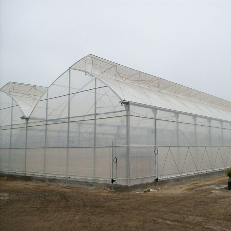 Greenhouse with plastic film cover