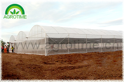 Multi span greenhouse for hydroponic system (CMY3830)