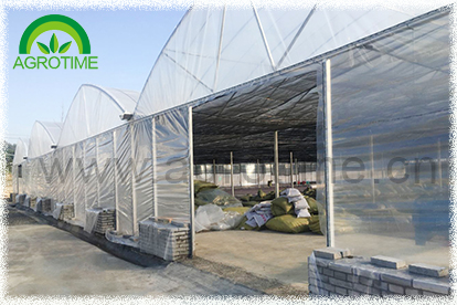 Multi span greenhouse for vegetable (CMS8060)