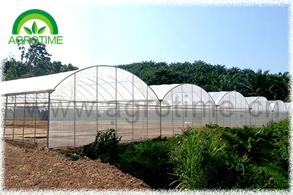 Multi span greenhouse (CMR5030)
